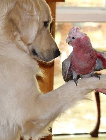 Dog and Parrot (Photo via OK Magazine)