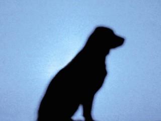 Stolen dog: image via houston.culturemap.com