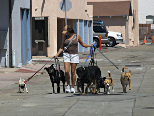 Dog Walker: Keep your dog fit and happy by taking him or her on regular walks