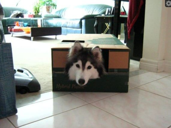 Tally in the Box (Image via Imgur)