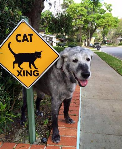 Crossing Guard Dog (Image via DogHeirs)
