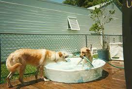 Dog wading pool: Source:Planetdogblog.com