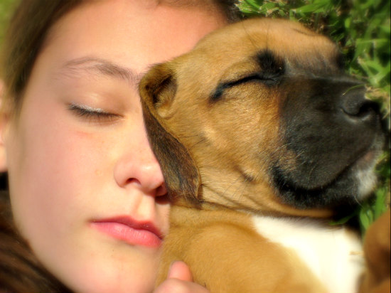 Studies show dogs crave praise and affection more than treats