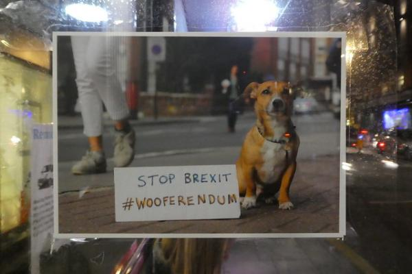 Dog's Brexit: The Top 10 Protesting Pets Of Brexit