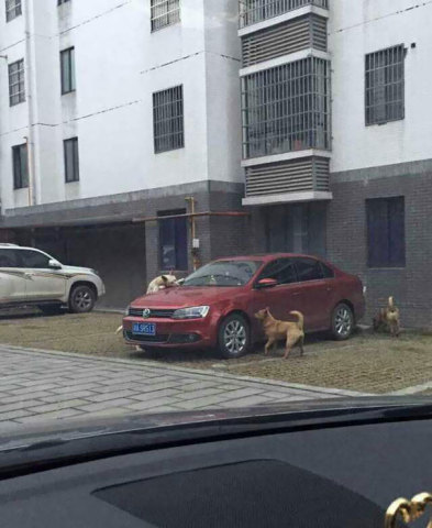 Revenge of the Hounds (Image via Bored Panda)