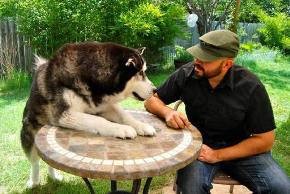 Arm Wrestling Dog (Image via Dogs are Family)