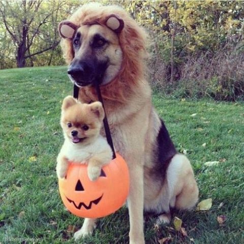 Halloween Dogs (Image via Dogs are Family)
