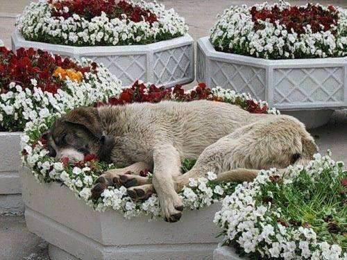 Dog Flower Bed (Image via Dogs Are Family)