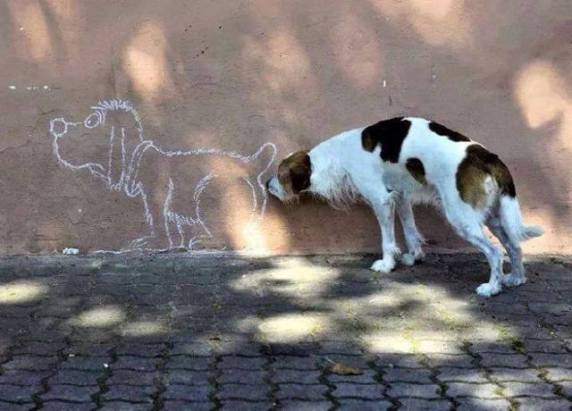 It's a Dog Sniff Dog World! (Photo via Facebook)