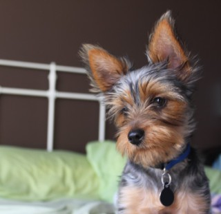 Dog wearing identity tag