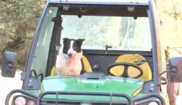 Don the Dog in the Tractor (YouTube Image)