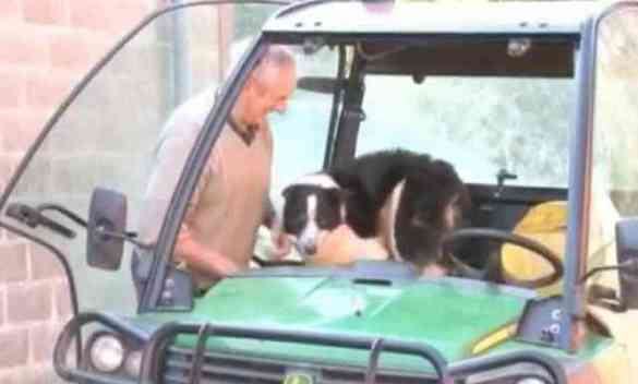 Don the Dog in the Tractor with Hamilton (YouTube Image)