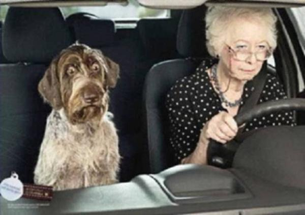 The Top Ten Pet & Animal Drivers