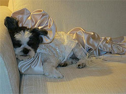 Baby Hope Diamond grabs a dog nap before her wedding ceremony: image via cnews.canoe.ca