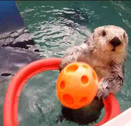 Eddie the Otter Makes a Slam Dunk (You Tube Image)