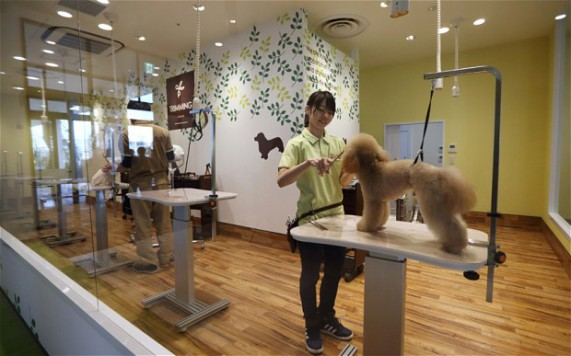 Dog Grooming (Image via Life With Dogs)