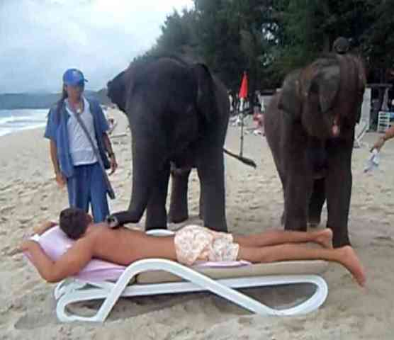 Elephant Massage (You Tube Image)