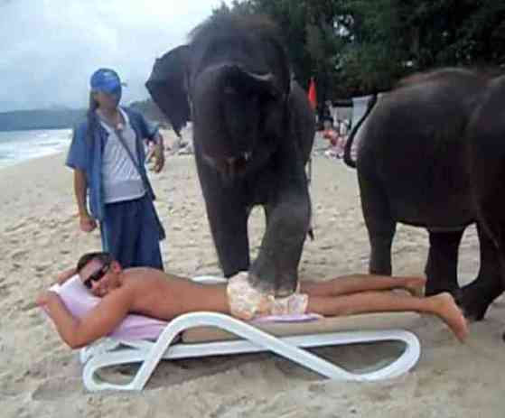 Elephant Butt Massage (You Tube Image)