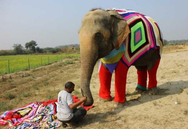 Elephant Pyjamas Warm Rehab Center's Rescued Pachyderms