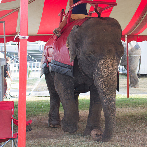 Circuses Are Not The Place For Our Elephants Anymore