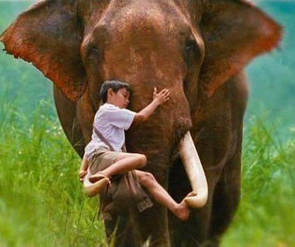 Elephant Cuddle (Photo via La Bioguia)