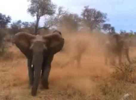 Charging Elephant (You Tube Image)