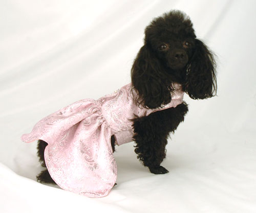 The Well Dressed Dog At A Wedding: Bridesmaids &amp- Ring Bearing Dogs ...