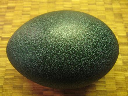 Emu Egg: (Photo by Austin & Zak /Creative Commons via Flickr)