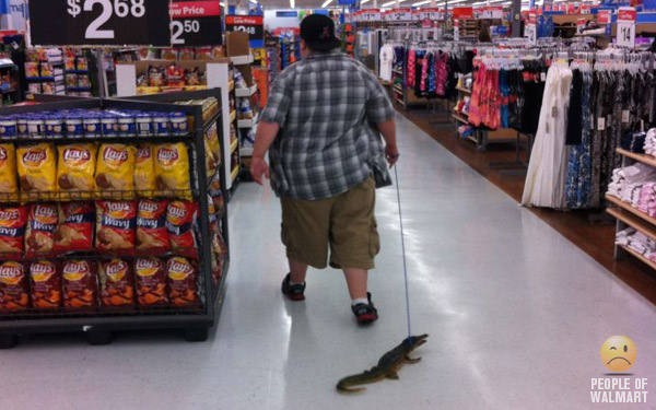 Wild In The Aisles The Top 10 Exotic Pets Of The People