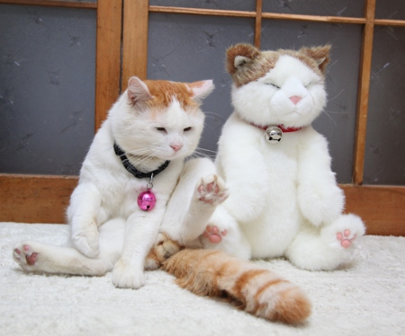 Shironeko And His Doll: image via catsparella.com
