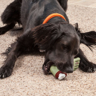 Dogs love thie squeal of the Zombie Foot!
