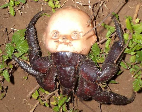 Hermit Crab With Doll's Head Shell Creeps Out The Internet