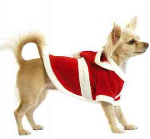 Dog in Santa Coat