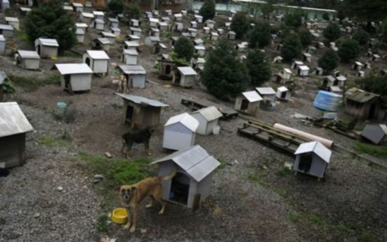 Favela for homeless dogs in Caxias do Sul: image via acidcow.com