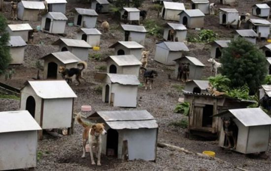 Favela for homeless dogs in Caxias do Sul
