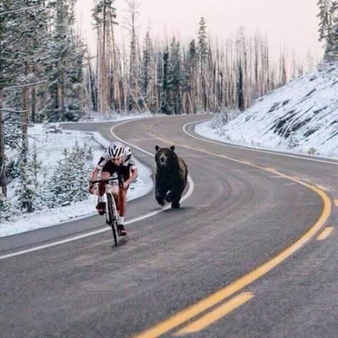 Fast Food Bear (Image via Facebook)
