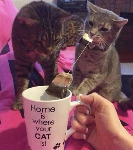 Tea Party Cats (Image via Facebook)