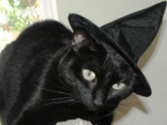 Ghoul For Cats: The Top 10 Freakiest Scariest Halloween Cat ...