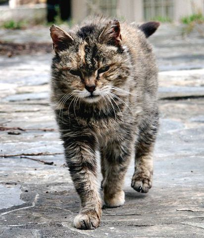 Feral Cat (Photo by Stavrolo/Creative Commons via Wikimedia)