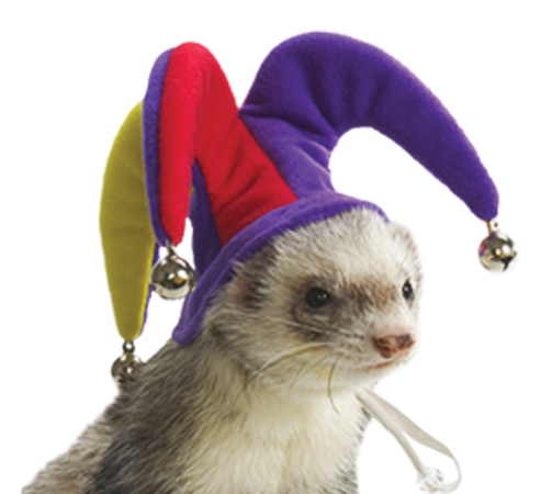 Ferret jester cap and bells