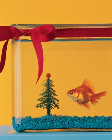 tie some ribbon or garland around the fishtank