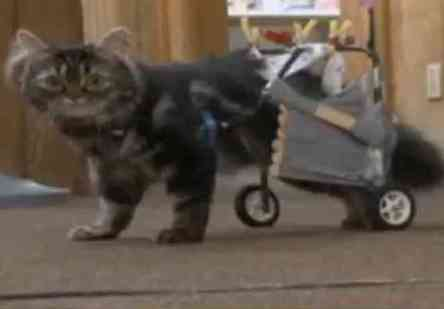 Flipper On The Go In Her Cart (You Tube Image)