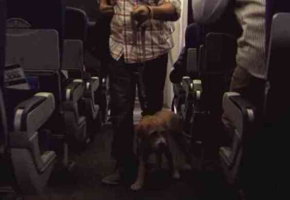Dog Being Trained for Air Travel (You Tube Image)