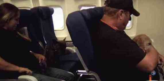Dogs Being Trained for Air Travel (You Tube Image)