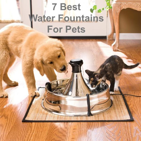 Dehydration In Dogs Cats And 7 Trendy Pet Fountains To Help