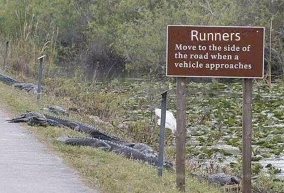 Roadside Allligators (Image via Oh Myyy)
