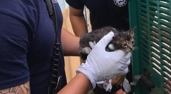 Feline-Friendly Florida Firefighters Free Electric Kitty
