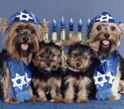 Hannukah Dogs (Image via Paw Nation)