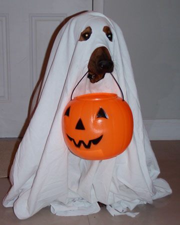 cute easy ghost dog costume & 5 Easy DIY Pet Costumes You Could Create In Your Sleep | Petslady.com
