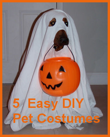 5 easy diy pet costumes you could create in your sleep petslady ghost dog publicscrutiny Images